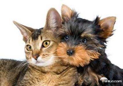Slatko crnka sa obrijane njom maca voli odozgo.
