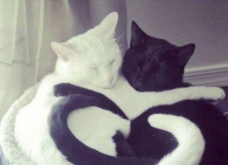 crna djevojka bijela maca redneck gay sex