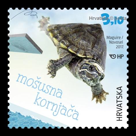 Mosusna kornjaca_marka