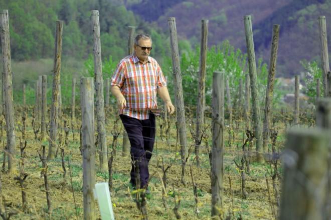 Vlado Krauthaker, predsjednik udruge Graševina Croatica