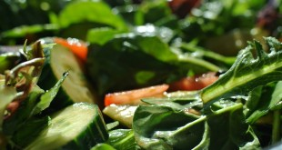 salad-872017_960_720