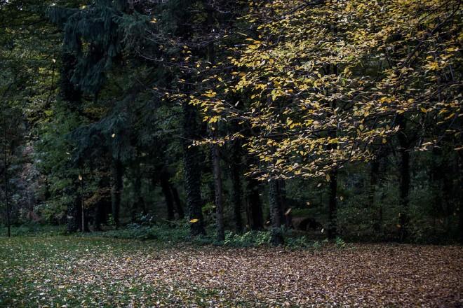 maksimir-jesen-21102017-12