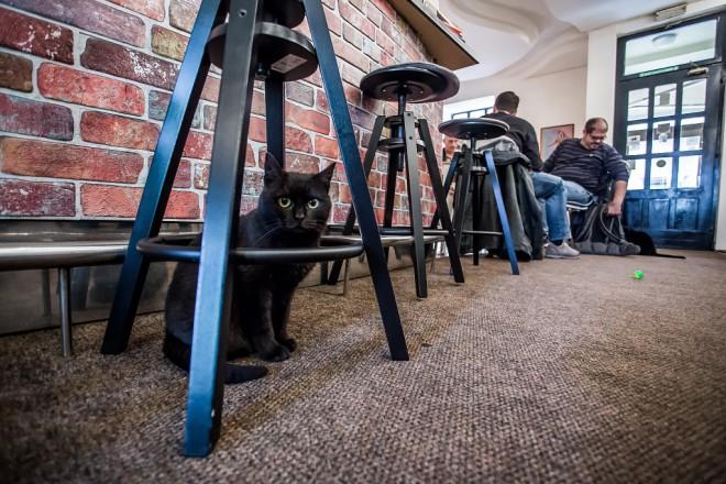 cat-caffe-23112017-03
