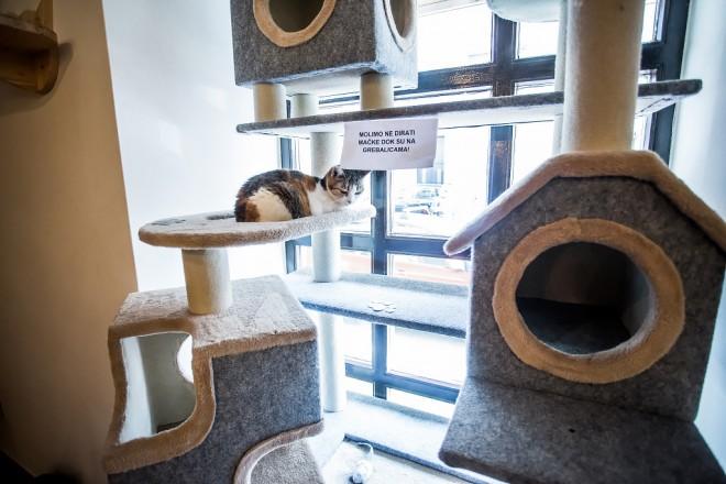 cat-caffe-23112017-12