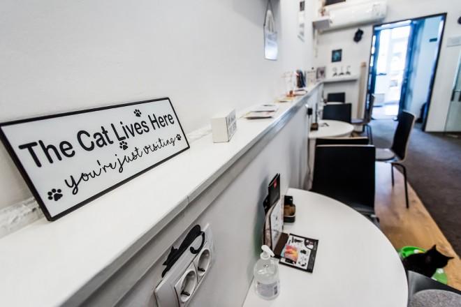 cat-caffe-23112017-17
