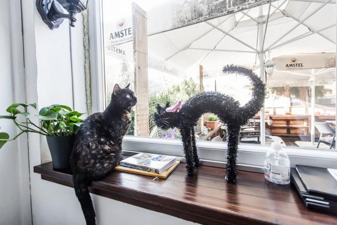 cat-caffe-23112017-22
