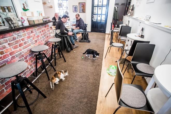 cat-caffe-23112017-25