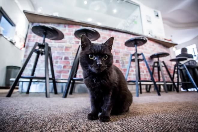 cat-caffe-23112017-33