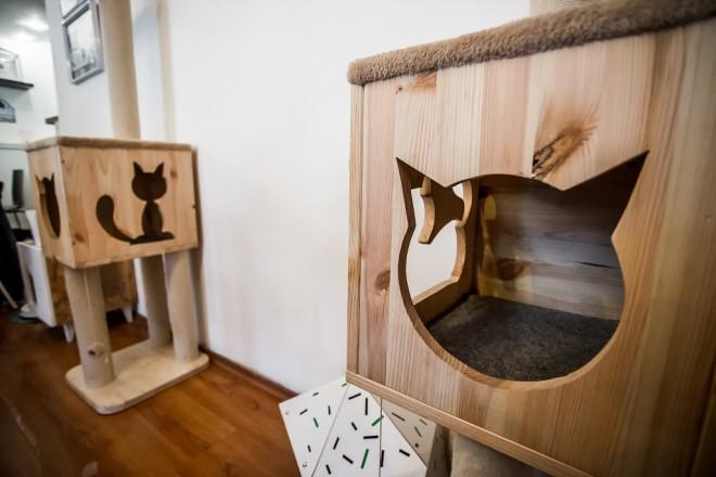 cat-caffe-23112017-34
