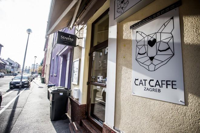 cat-caffe-23112017-38