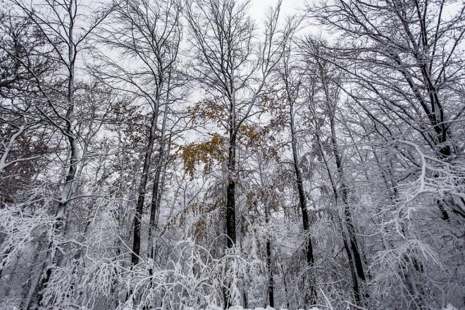 snijeg-medvednica-13112017-00