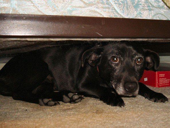 Pas ispod kreveta_PETA