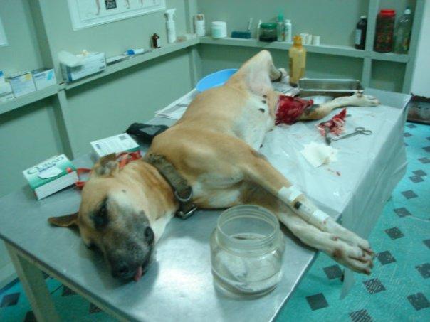 Pas ozlijedjen petardom