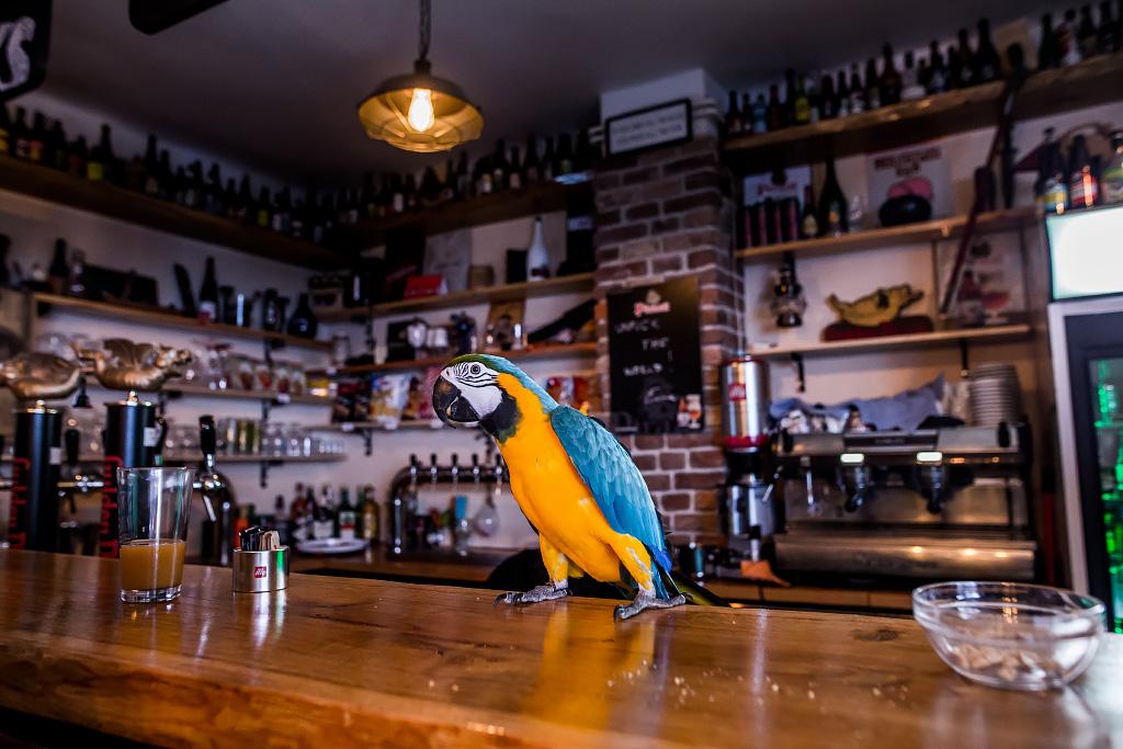 papagaj-svijet-piva-24112017-01
