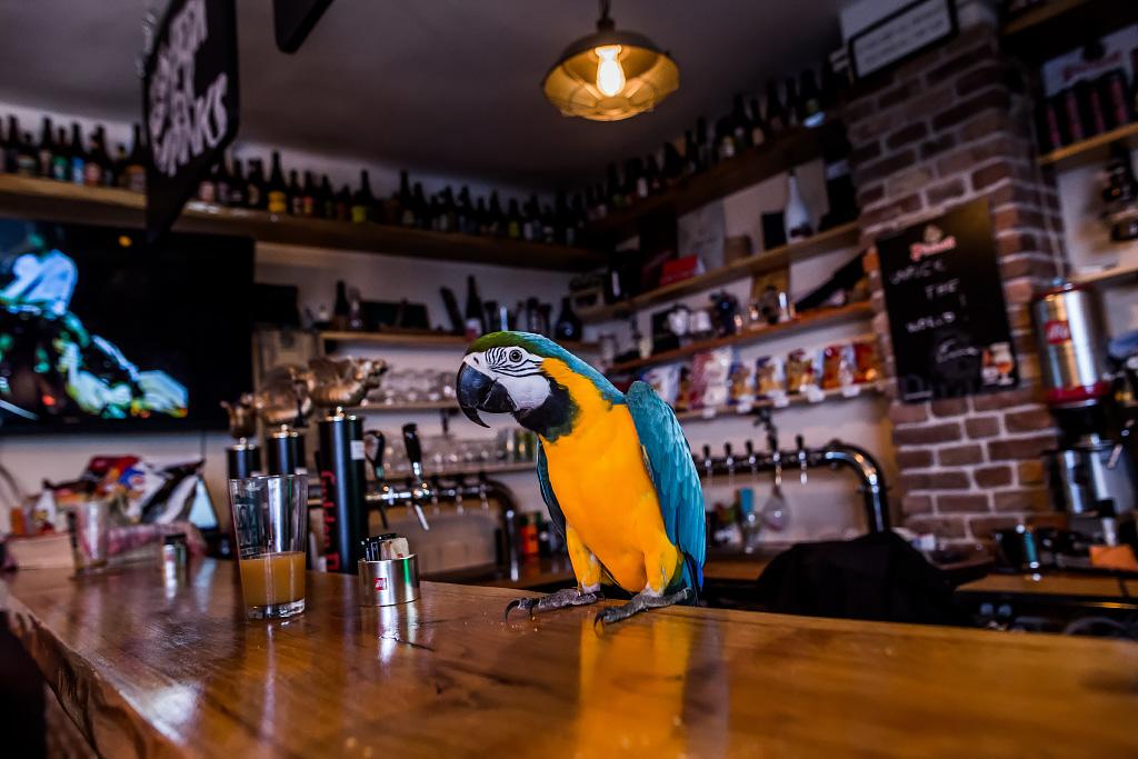 papagaj-svijet-piva-24112017-02