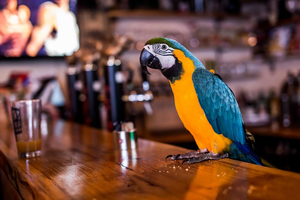 papagaj-svijet-piva-24112017-08