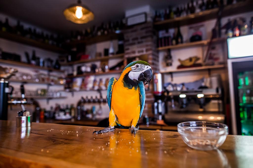 papagaj-svijet-piva-24112017-09