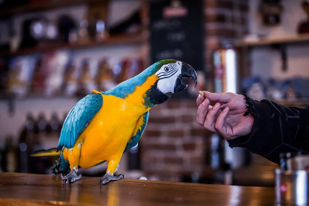 papagaj-svijet-piva-24112017-11
