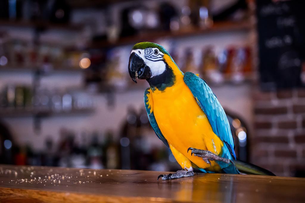 papagaj-svijet-piva-24112017-12