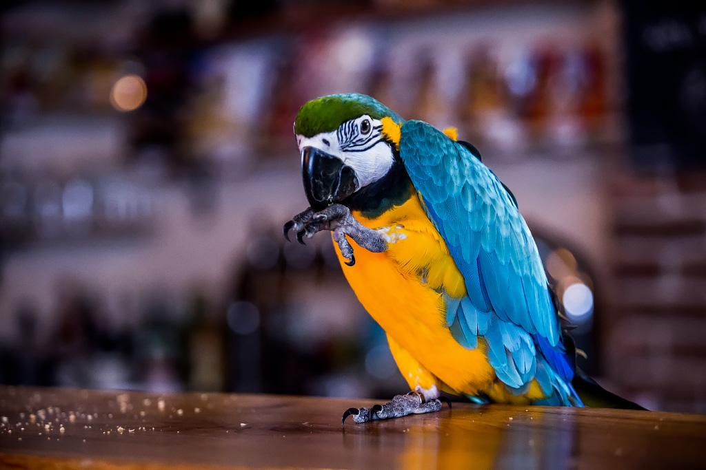 papagaj-svijet-piva-24112017-13