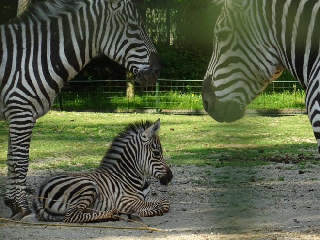 Posao Iz Snova Za Ljubitelje Zivotinja Zagrebacki Zoo Trazi Studente Zagreb Info