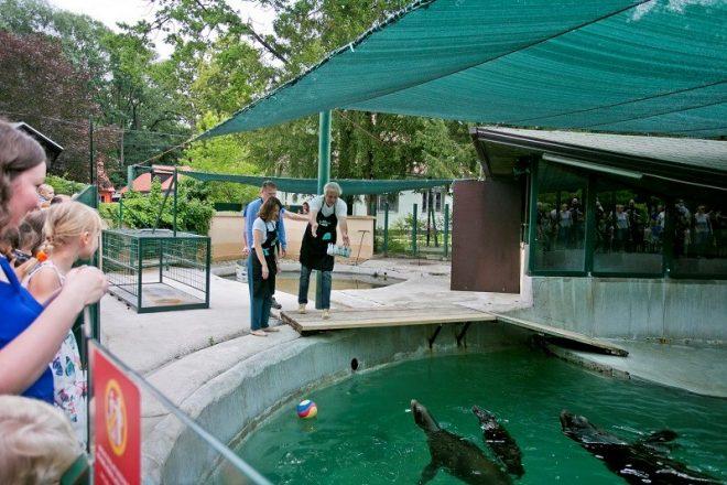 Zoo Vrt Proslavio 93 Rođendan Jednogodisnja Morska Lavica Dobila